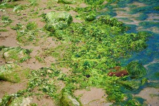 Nature, Plant, Landscape, Wallpaper, Moss, Texture
