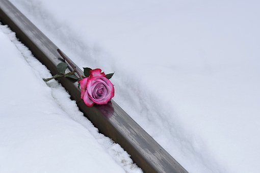 Pink Rose On Railway, Love Symbol, Winter, Snowy