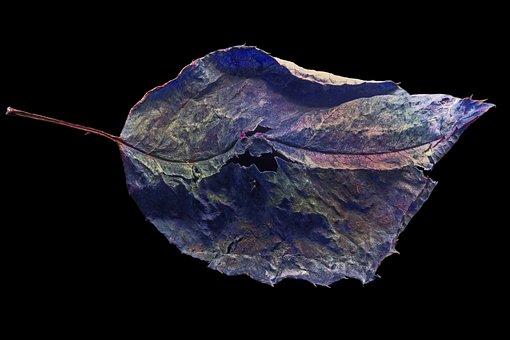 Nature, Background, Rosenblatt, Close, Plant, Withered