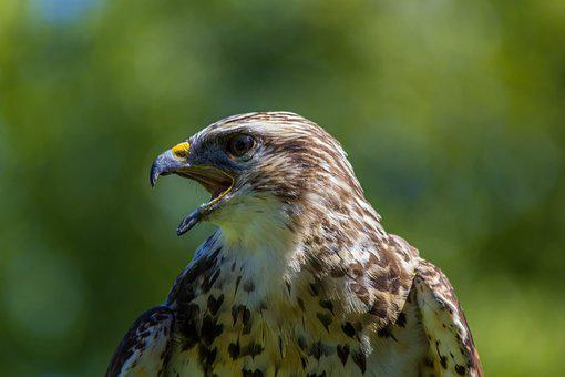 Wild Life, Birds, Nature, Bird Of Prey, Animalia, Peak