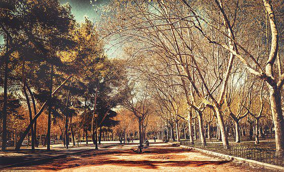 Tree, Nature, Autumn, Wood, Landscape, Park, Leaf