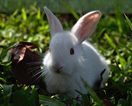 Rabbit, Bunny, Hare, Easter, Cute, Animal, Little, Pet