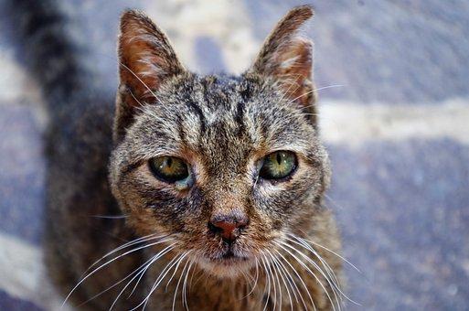 Cat, Wounded Cat, Sick Cat