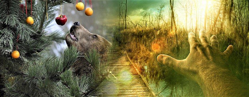 Nature, Animal Kingdom, Color, Desktop Background