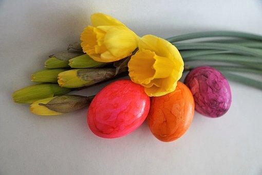 Food, Background, Flower, Healthy, Color, Fruit, Nature