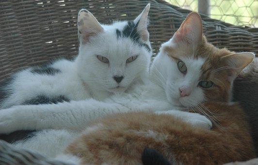 Cute, Cat, Animal Kingdom, Domestic