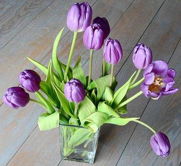 Tulip, Easter, Nature, Flowers, Plant, Sheet, Flowering
