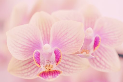 Flower, Tropical, Petal, Plant, Nature, Bloom, Flower's