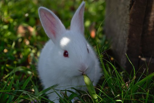Rabbit, Grass, Cute, Bunny, Easter, Animal, Furry