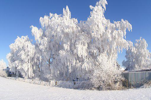 Snow, Winter, Frost, Cold, Frozen Tree, Icy, Ice, White