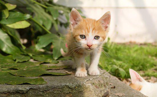 Cute, Animal, Nature, Little, Cat, Orange, Kitten