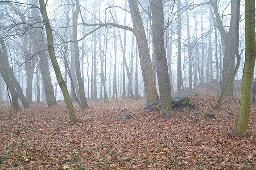 Tree, Nature, Leaf, Autumn, Landscape, Haze, Way, Park