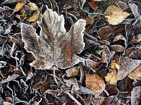 Nature, Leaf, Fall, Dry, Wood, Ground, Frost