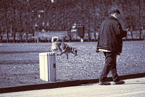 Dog, Animal, Mammal, Canine, Jumping, Jumping Dog, Man