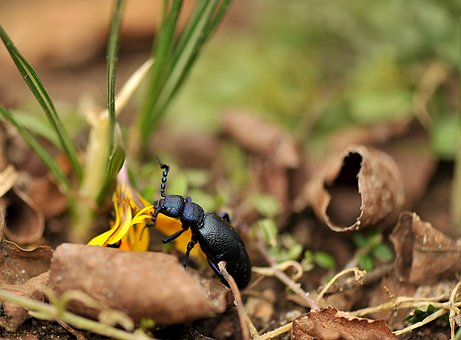 Small, Nature, Insect, Animal World, Beetle