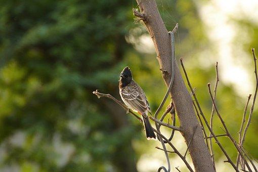 Nature, Bird, Outdoors, Tree, Wildlife, Bulbul, Animal