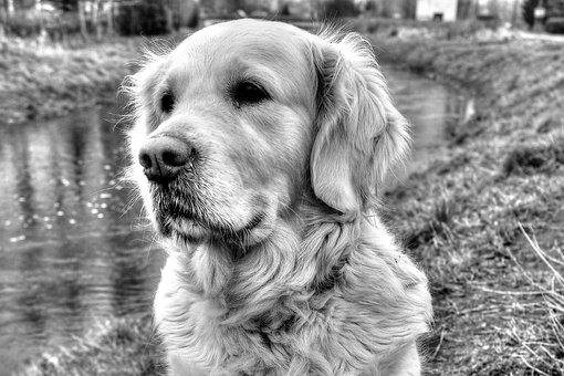 Dog House, Canidae, Charming, Pets