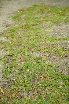 Grass, Leaves, Nature, Plant, Wallpaper, Terry, Autumn