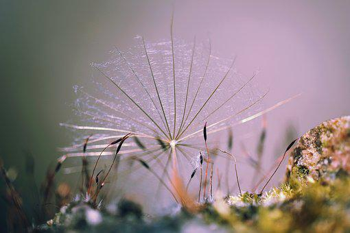 Nature, Plant, Moss, Seeds, Pointed Goatee, Close