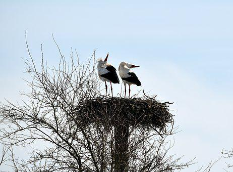 Storks, Rattle, Rattle Stork, Bird, Animal World