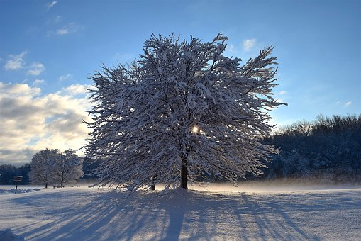 Snow, Tree, Sunlight, Shadow, Winter, Cold, Frost