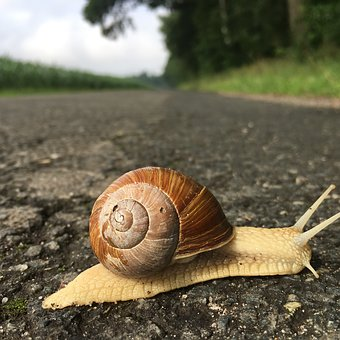Snail, Slowly, Shellfish, Bauchfuesser, Slimy, Close