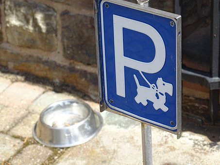 Dog, Bowl, Trough, Restaurant, Out, Stay, Park, Parking