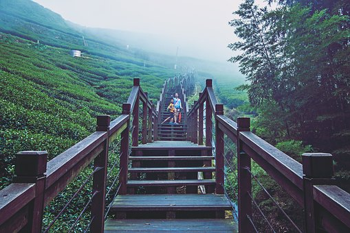 Wood, Nature, Outdoor, Tourism, Bridge, Stairs