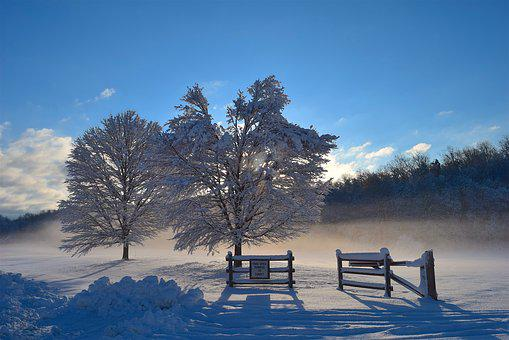 Snow, Trees, Sunlight, Shadow, Mist, Winter, Cold