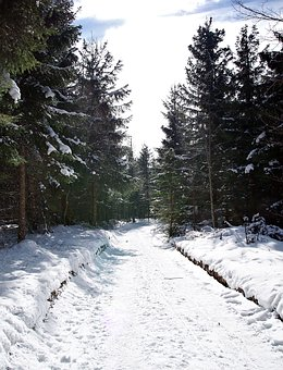 Way, The Path, Snow, Winter, Cold, Tree, Frost, Forest