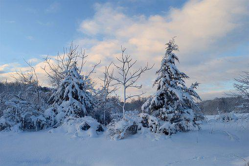 Snow, Tree, Winter, Cold, Frost, Nature, White, Season
