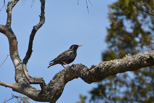 Nature, Tree, Birds, Animal Life, Outdoor, Wing, Bill