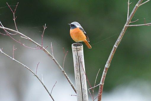 Wild Animals, Bird, Natural, Outdoors, Animal, A Key