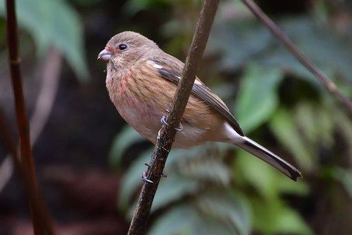 Wild Animals, Bird, Natural, Animal, Veneer System The