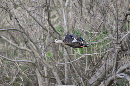 Animal, River, Waterside, Grass, Wood, Bird, Wild Birds