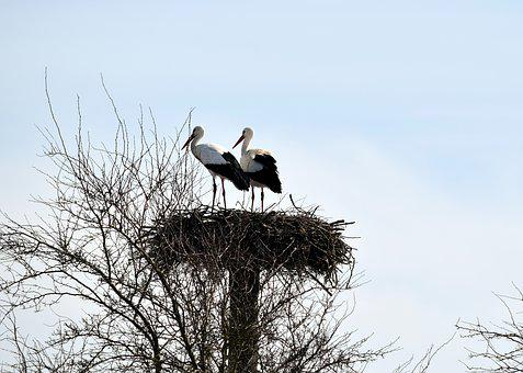 Storks, Bird, Animal World, Nature, Animal, Sky, Vogel