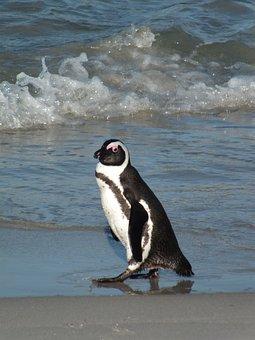 Sea, Water, Bird, Ocean, Beach, Penguin