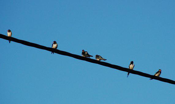 The Dome Of The Sky, Birds, Swallow, Cable