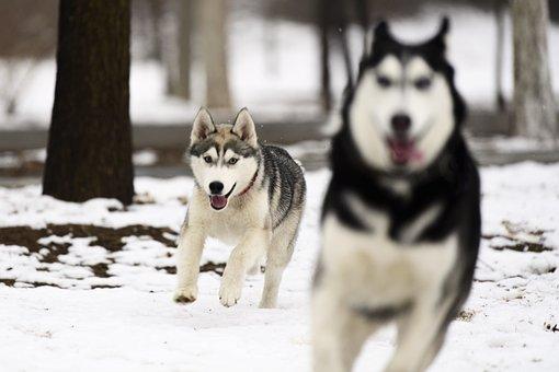 Dog, Canine, Mammal, Portrait