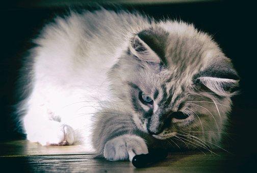 Cat, Animal Kingdom, Mammals, Cute