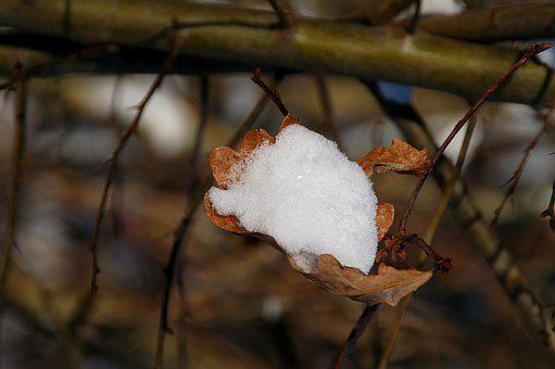 Nature, Autumn Leaf, Snow, Caught, Winter, Stick