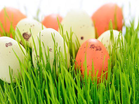 Easter Holidays, Easter, Lawn, Eating, Nature, New Life
