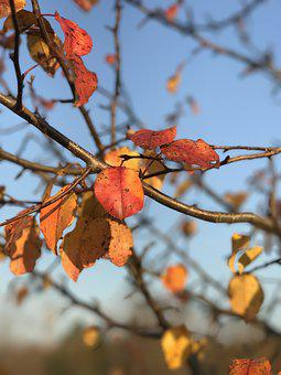 Fall, Leaf, Nature, Tree, Branch, Orange, Color