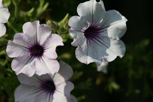 Flower, Flora, Nature, Garden, Summer, Color, Floral