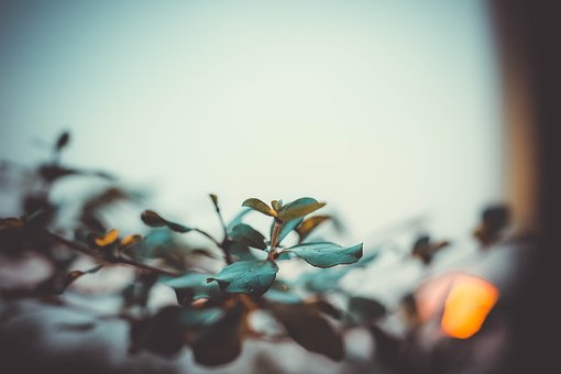Nature, Desktop, Blur, Leaf, Color, Garden, Sun, Sky
