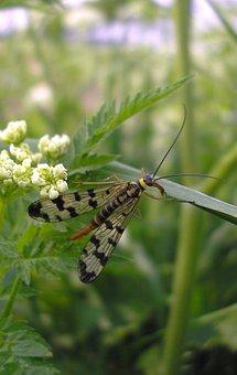 Bug, Nature, Outdoor, Plant, Garden, Wild