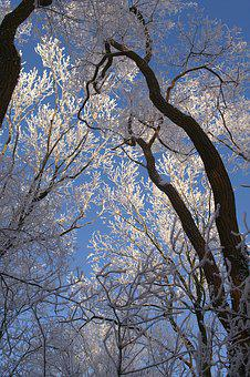 Tree, Branch, Wood, Winter, Nature, Snow, Covered, Icy