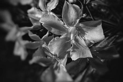 Flower, Leaf, Flora, Nature, Outdoors, Tree, Petal