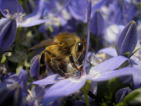 Bee, Garden, Macro, Bug, Flower, Eyes, Legs, Body