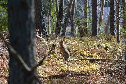 Wood, Nature, Tree, Outdoor, Leaf, Animal Life, Wild
